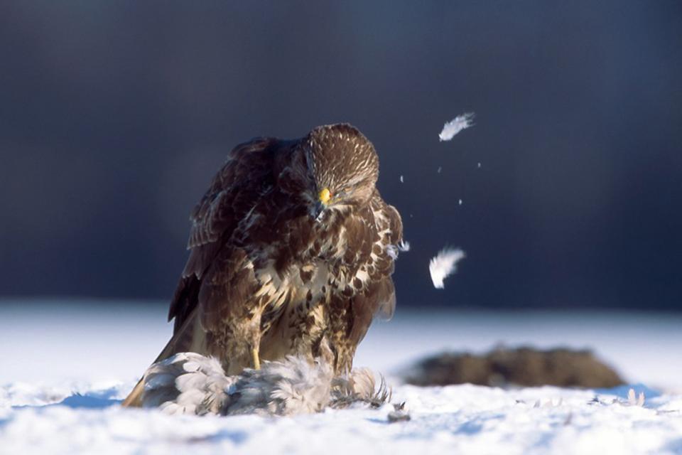 La fauna , Bosnia Herzegovina