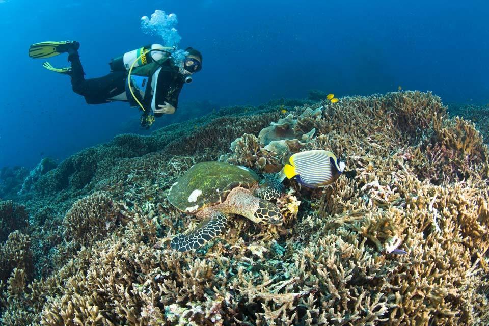 Turtles , Scuba diving , Sri Lanka