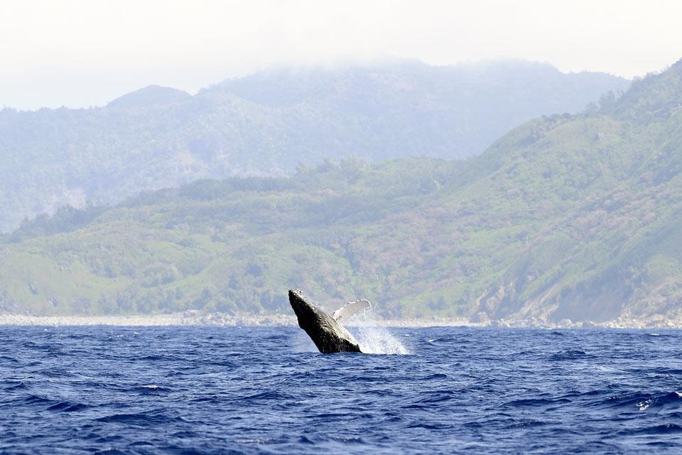 Baleines et dauphins , Sri Lanka