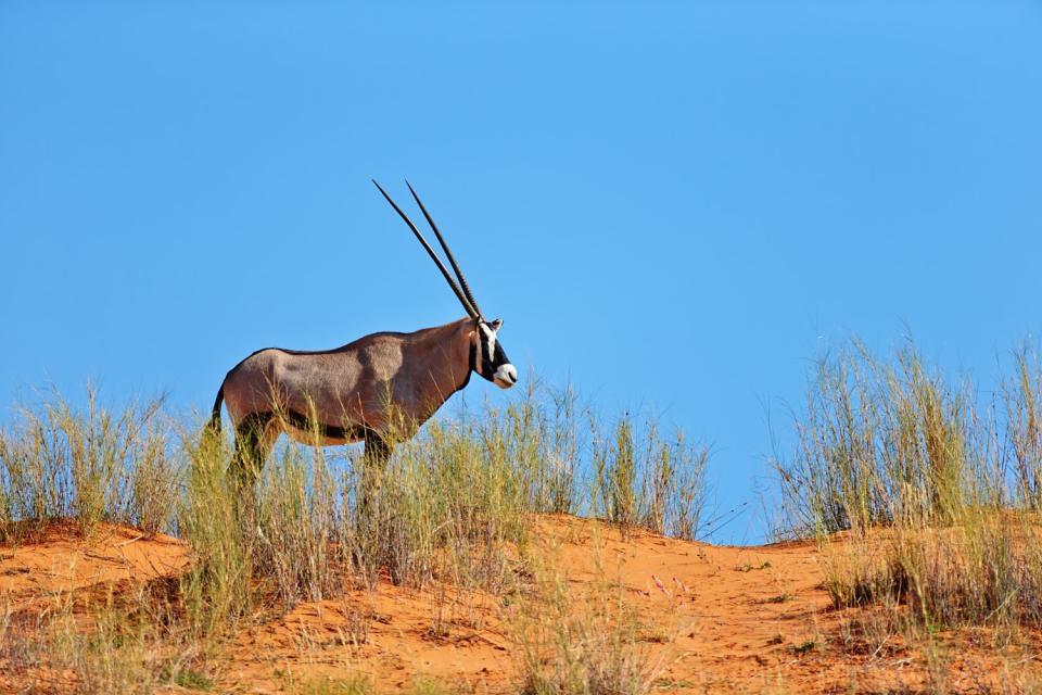 The Kalahari , The various reserves of the desert , Botswana