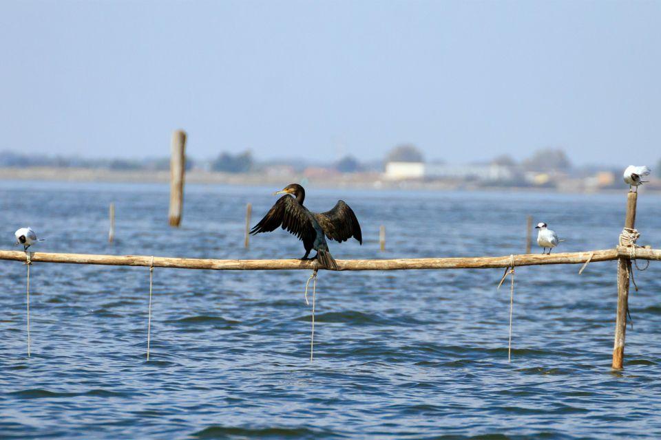 Il delta del Po , Un aspetto ecologico , Italia