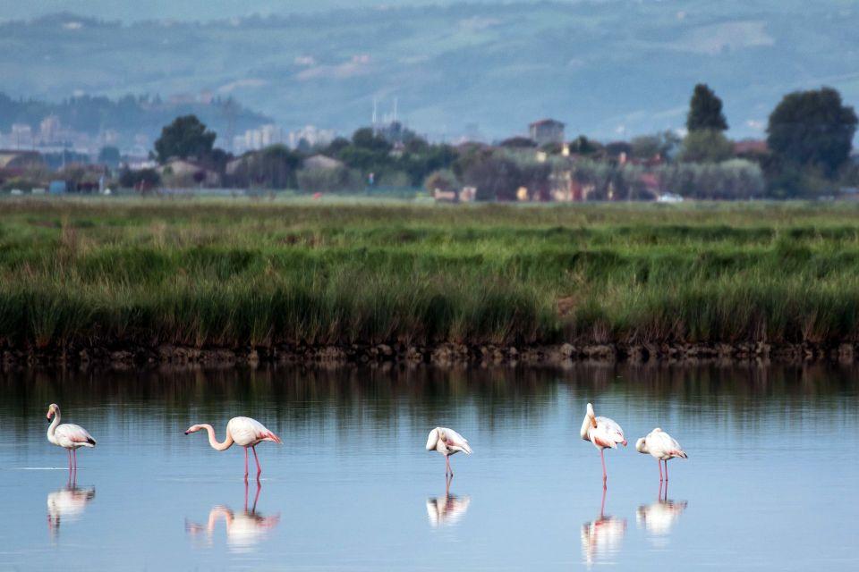 Il delta del Po , Parco regionale del Delta del Po , Italia