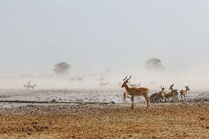Los Parques de Makgadikgadi y Nxai Pan , Los parques de Makgadikgadi y Nxai Pan , Botsuana
