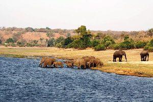 El Parque Nacional de Chobe , El Chobe National Park , Botsuana
