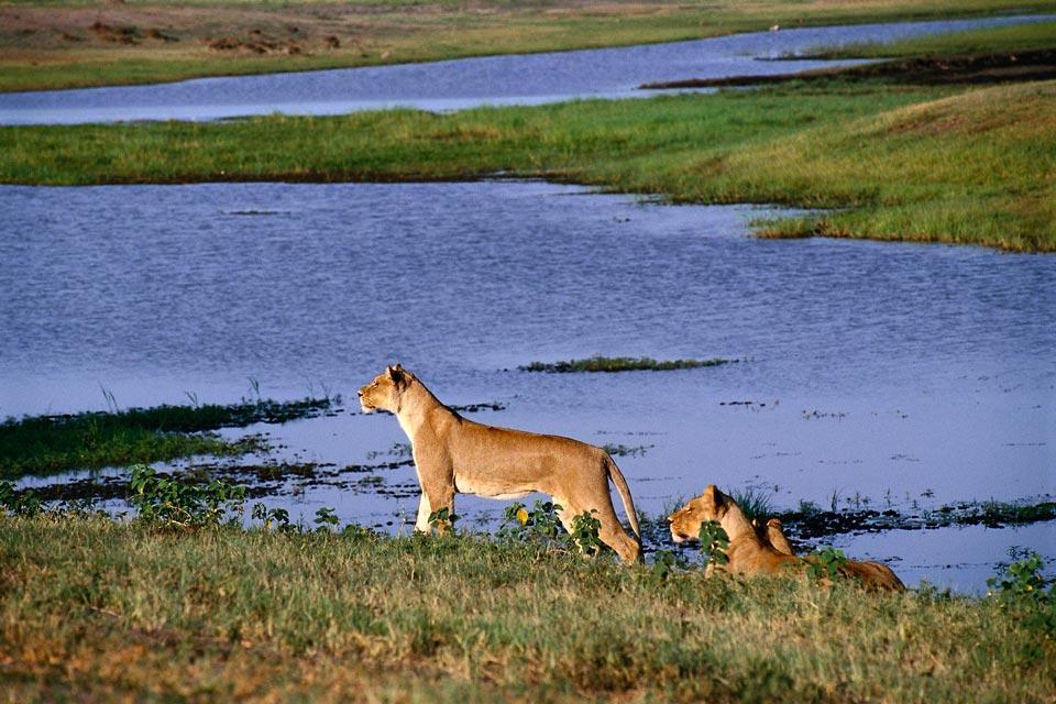 Le Chobe National Park , Les zones du parc , Botswana
