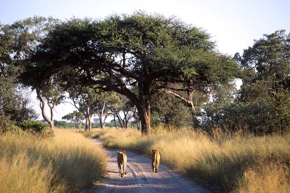 Le Chobe National Park , L'hébergement du parc , Botswana