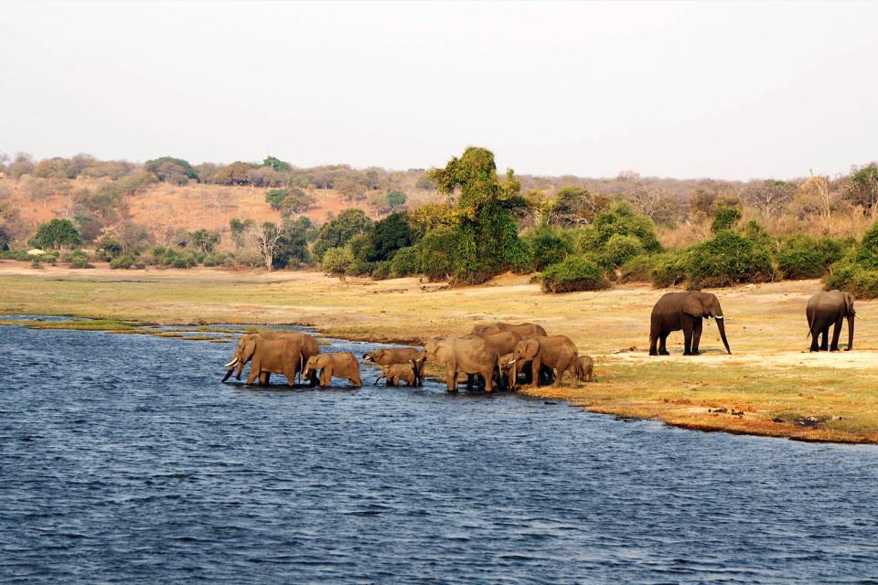 Le Chobe National Park , Botswana