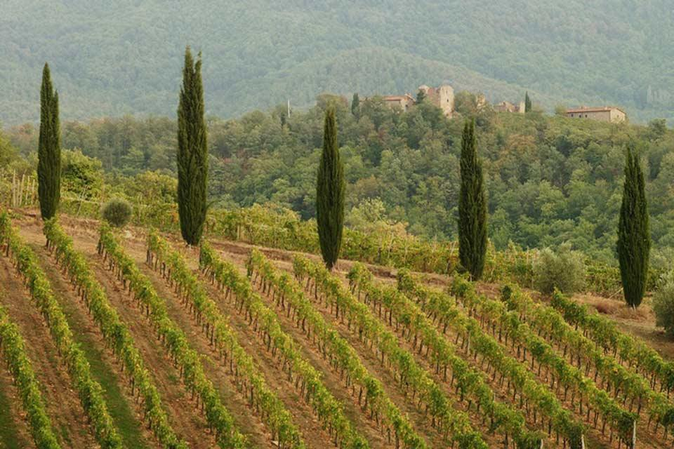 Le Chianti , The vineyards of Chianti , Italy