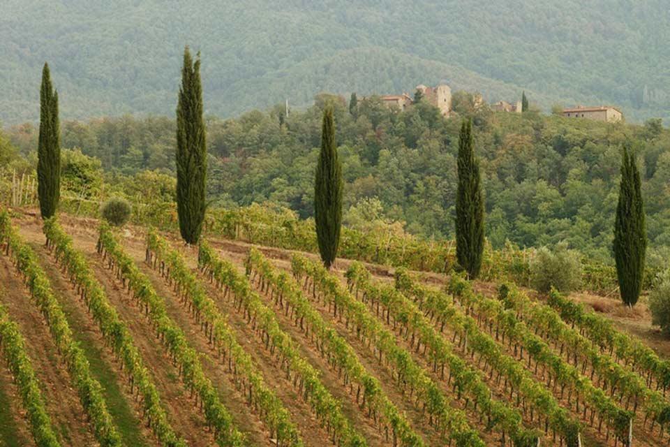 Chianti , Las viñas, Chianti , Italia