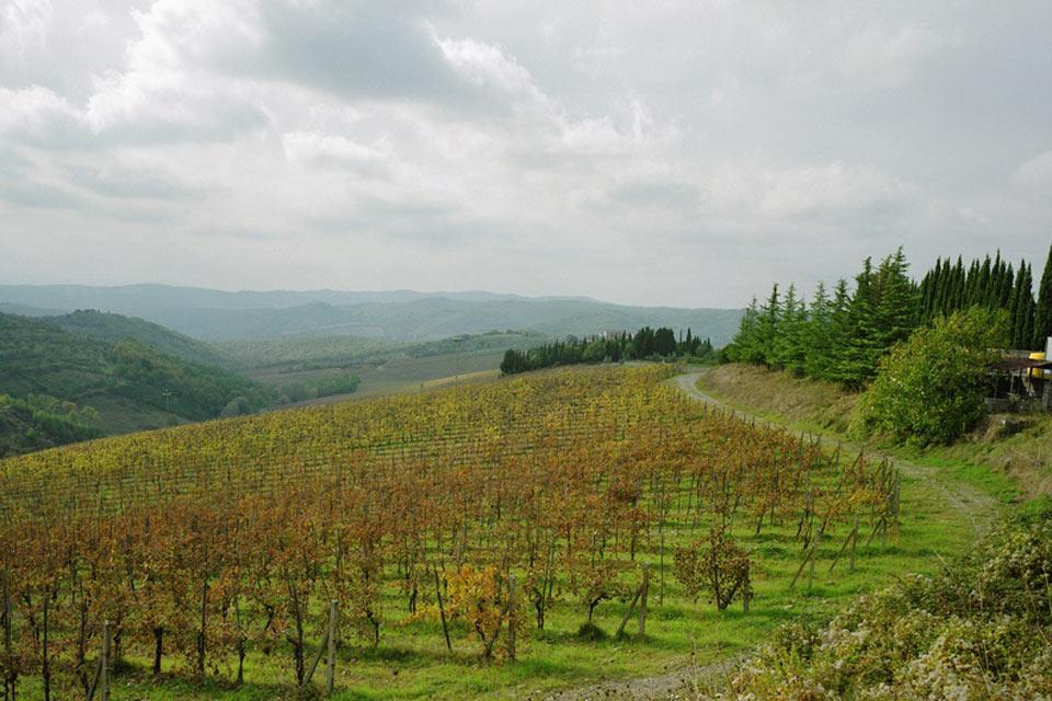 Le Chianti , Le Chianti, paysage , Italie