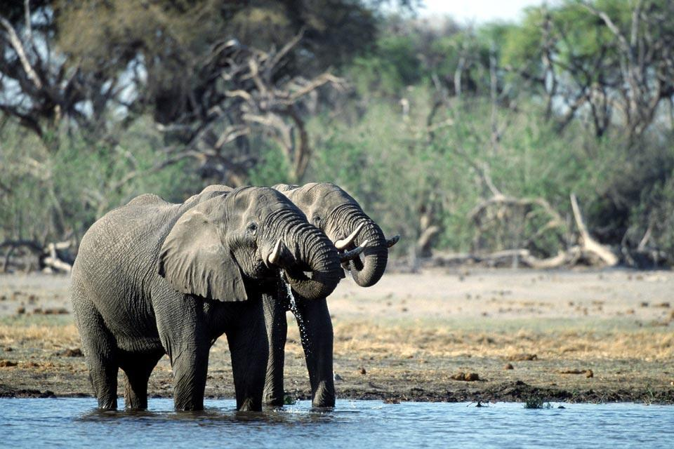 The Central Kalahari Game Reserve , Botswana