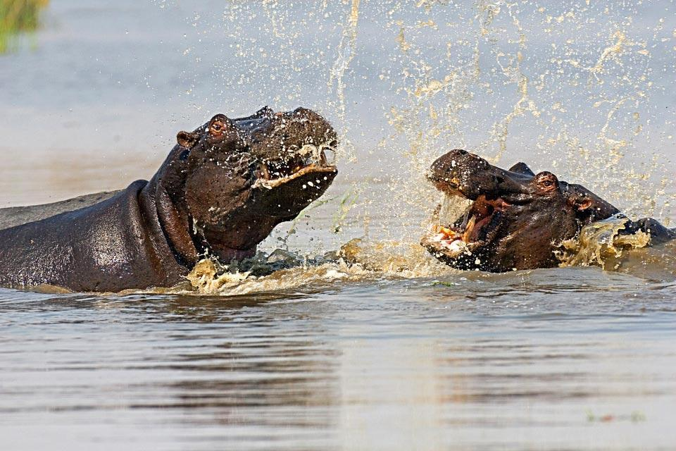 The Central Kalahari Game Reserve , The Central Kalahari Game Reserve, Botswana , Botswana
