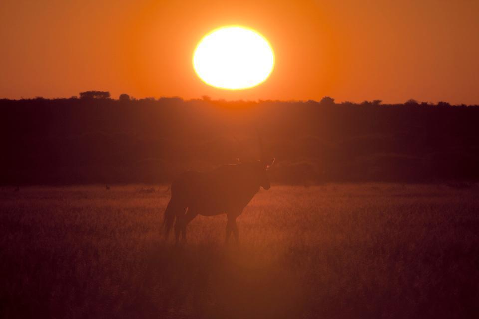 Le Central Kalahari Game Reserve , Le parc incendié , Botswana
