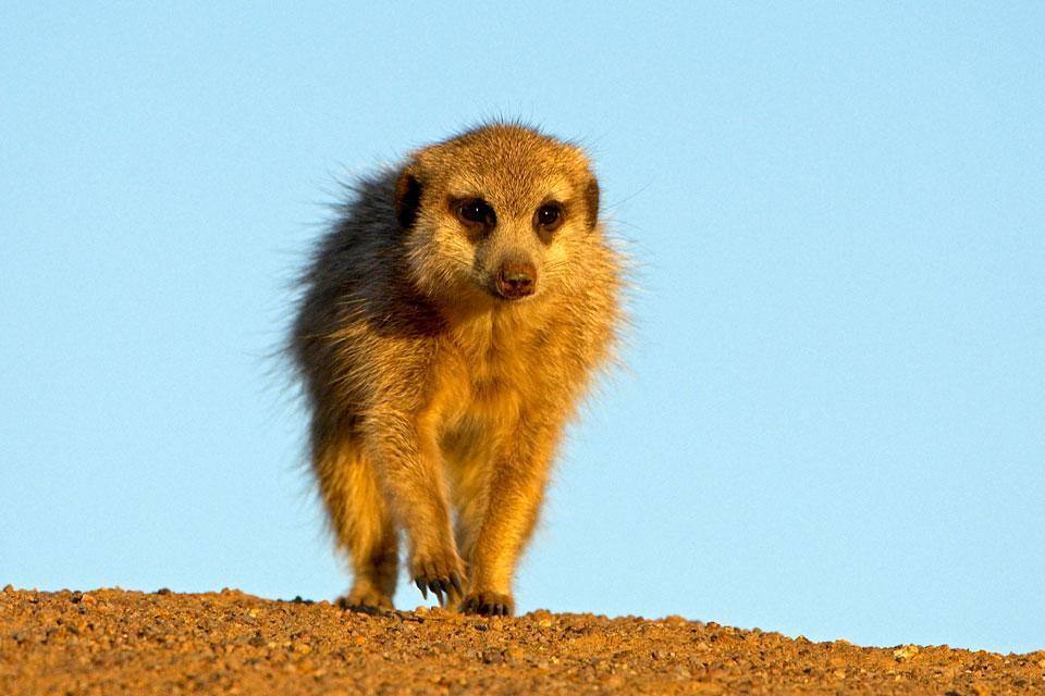 Le Central Kalahari Game Reserve , Botswana