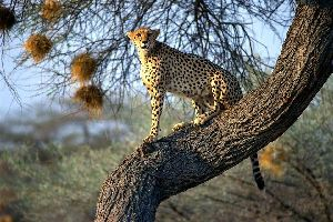 Parque Nacional de Mabuasehube Gemsbok , El Mabuasehube Gemsbok National Park , Botsuana
