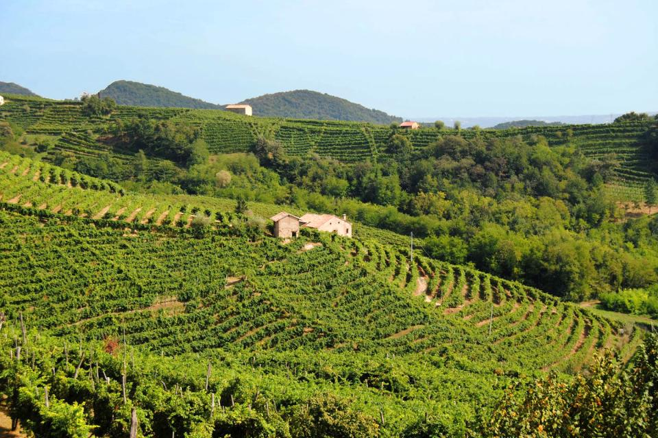 Les vignobles et le vin , La terre du vin , Italie