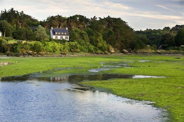 Forests , Brittany's salt marshes , France