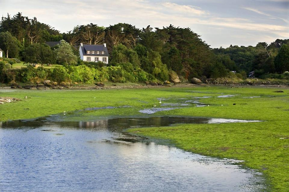 Forests , Brittany's salt marshes , France