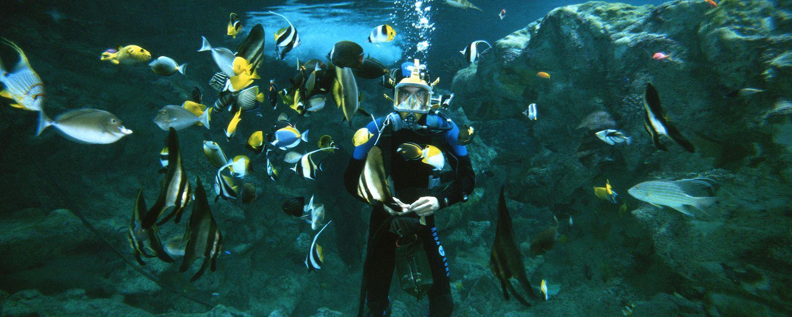 "The ""John R. O'Flaherty"" , Diving at Océanopolis , France"