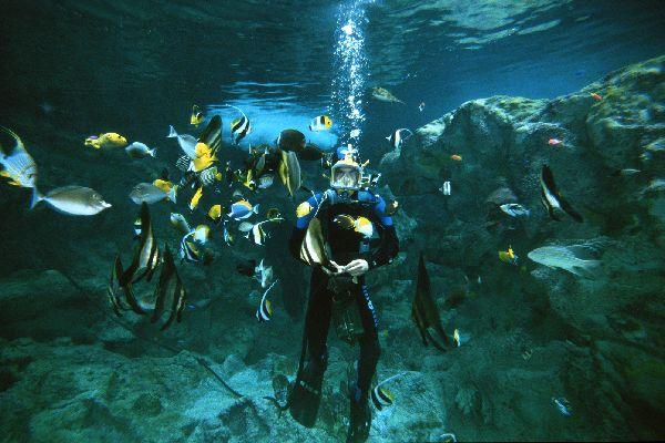 Océanopolis , Diversión submarina en Oceanópolis , Francia