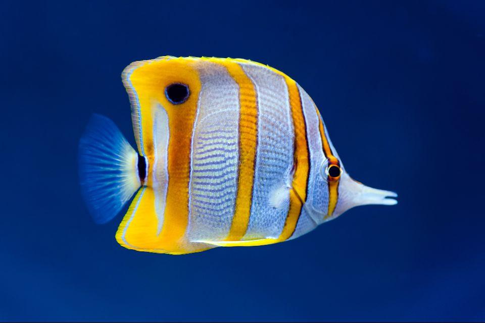 "The ""John R. O'Flaherty"" , A sawfish , France"