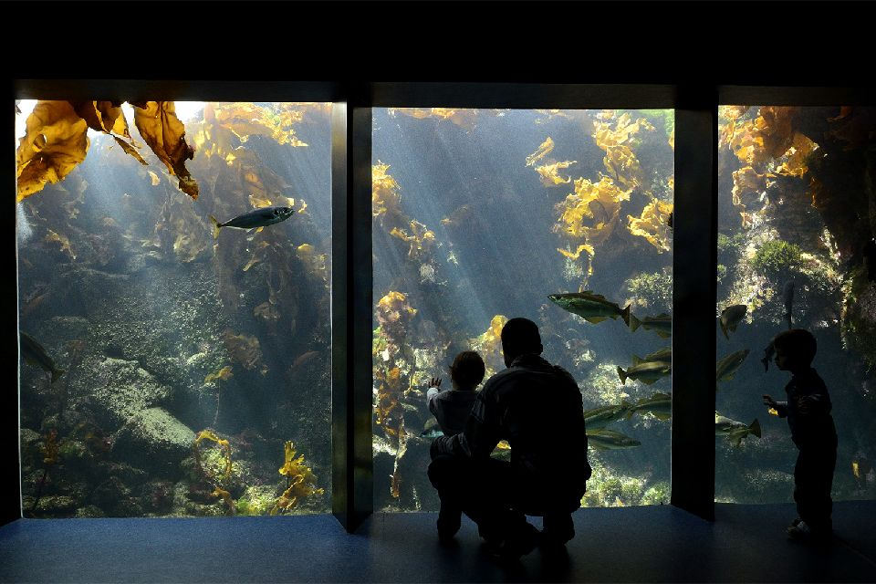 """The """"John R. O'Flaherty"""" , Océanopolis , fun for young and old alike , France"""
