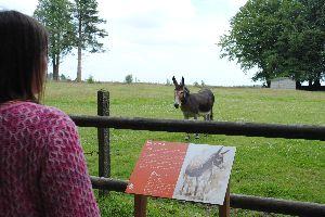 Le domaine de Ménez-Meur , Une visiteuse et un âne , France