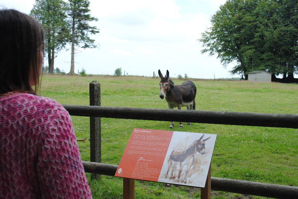 La zona de Ménez-Meur , Una visitante y un burro , Francia
