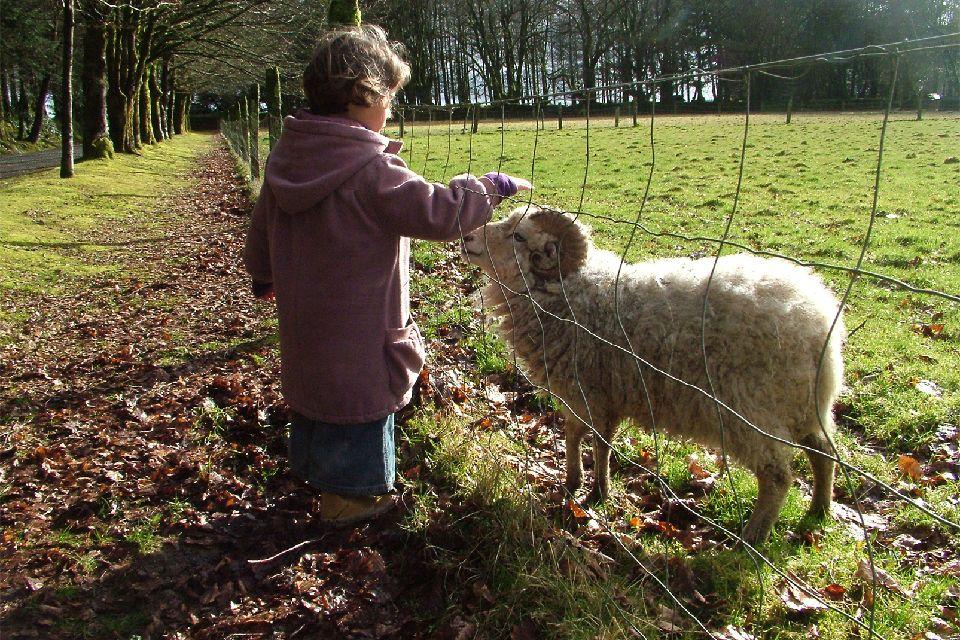 La zona de Ménez-Meur , Los carneros adoran las caricias. , Francia