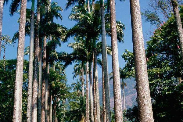 Rio Botanical Gardens , The Botanic Garden of Rio, Brazil , Brazil