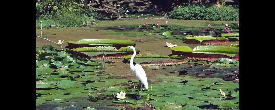 Il giardino botanico di rio brasile - Giardino delle ninfee ...