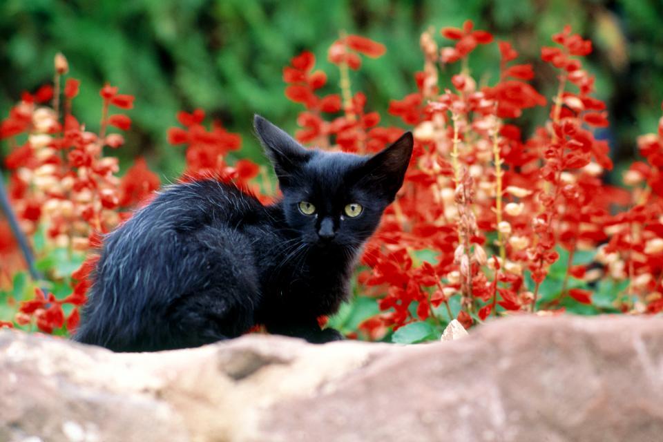 La fauna de la ribera , El gato, ¿animal doméstico parisiense? , Francia