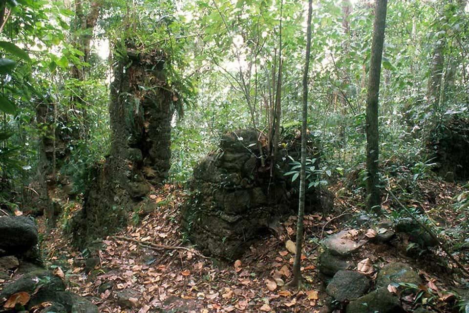 La forêt de Tijuca , Tijuca , Brésil