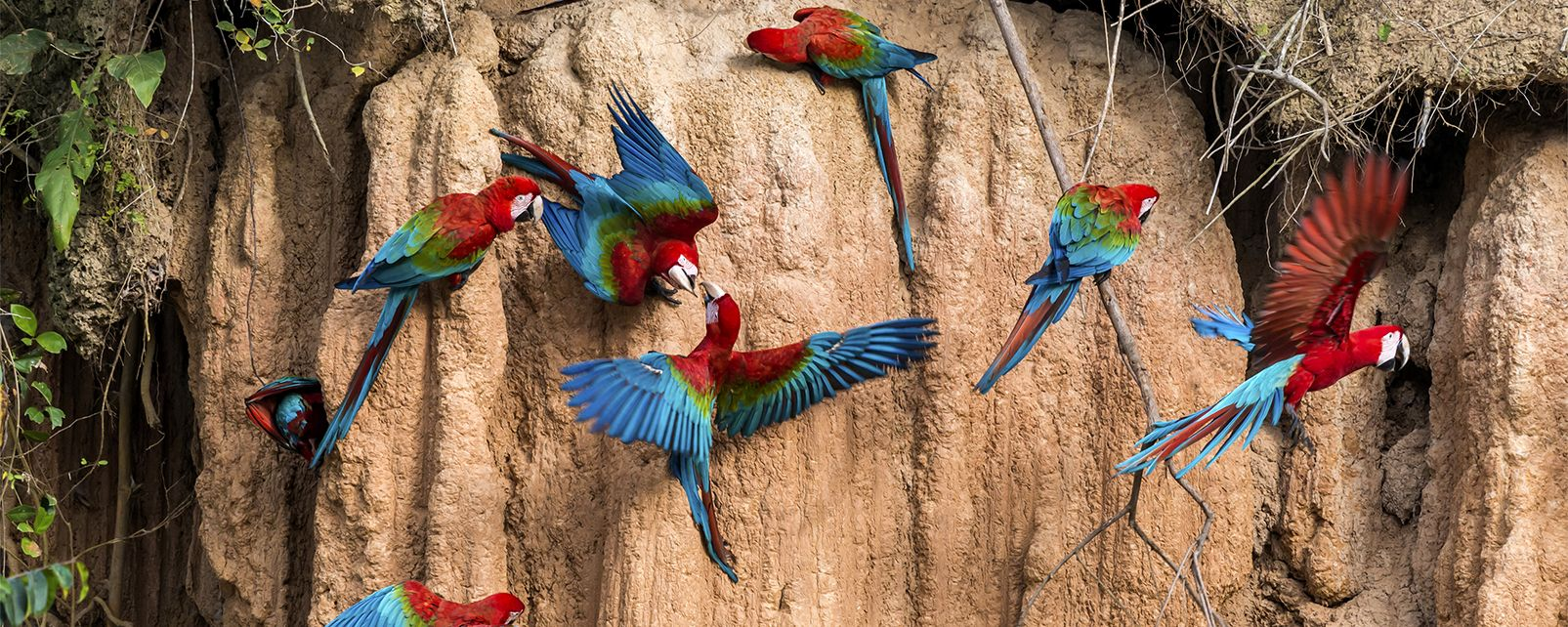 Amazonia , The Amazon Rainforest , Brazil