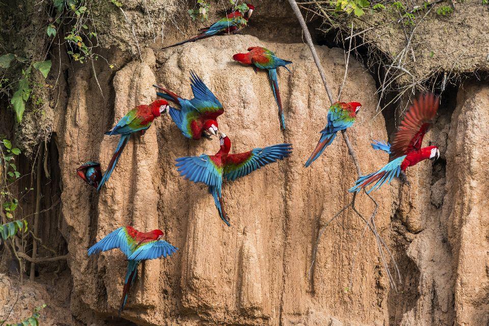 La faune amazonienne. , L'Amazonie , Brésil