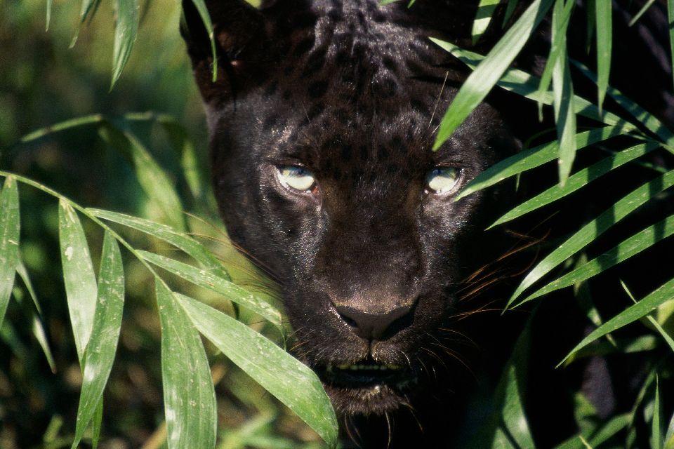 La faune amazonienne. , L'Amazone , Brésil