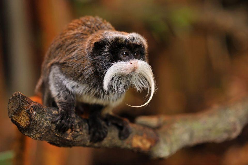 La faune amazonienne. , Croisière sur l'Amazone , Brésil