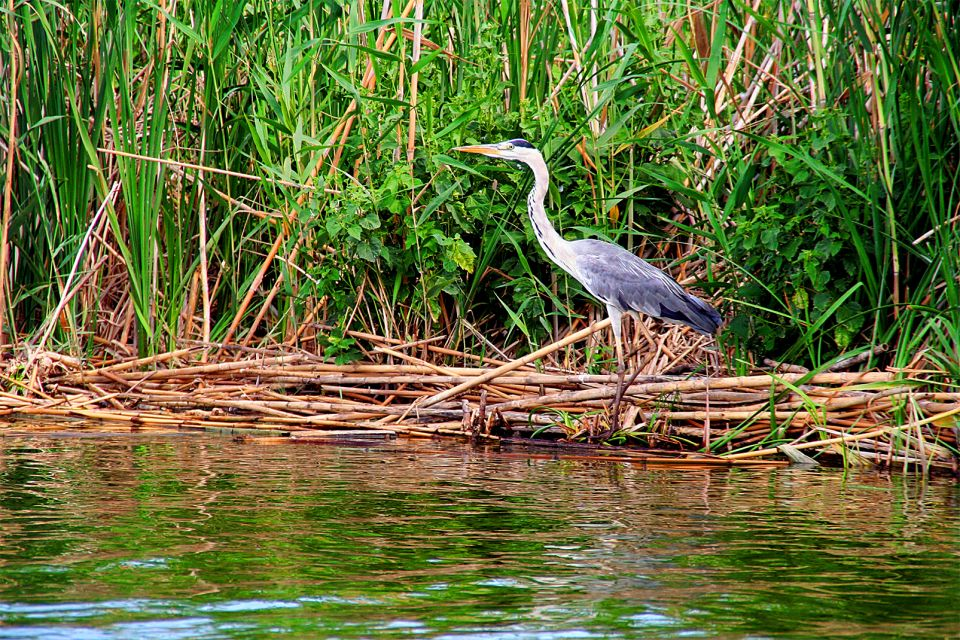 , The Albufera and the La Mata Lagoons, The fauna and flora, Community of Valencia