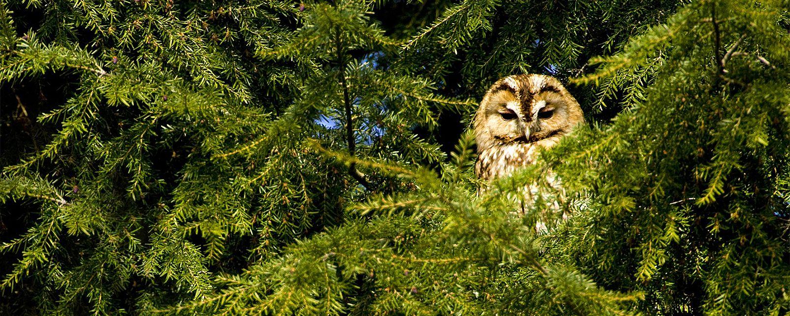 Civetta in mezzo a un pino, Il Parco Naturale del Montgó, La fauna e la flora, Comunità valenzana