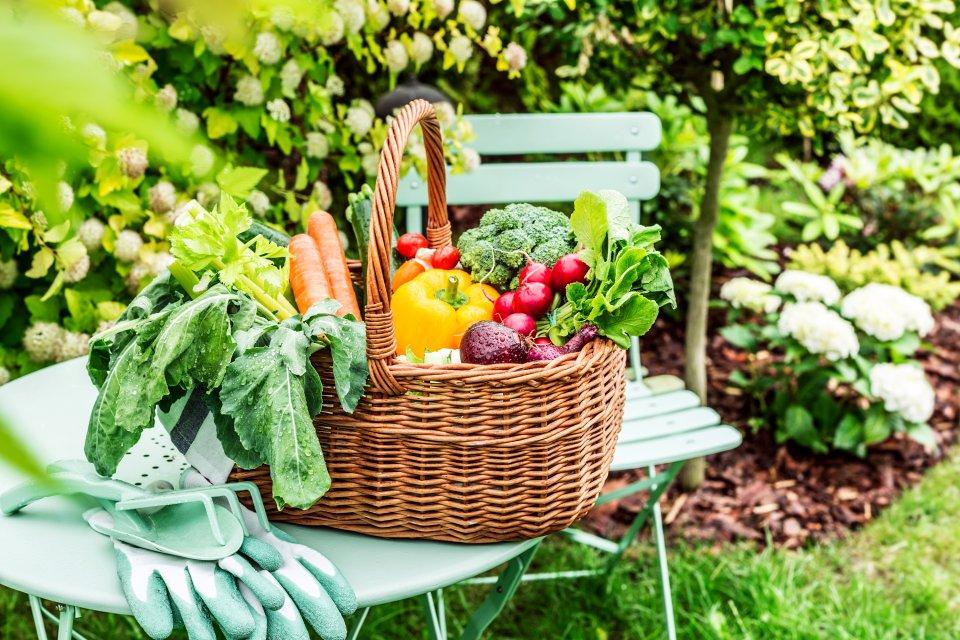 Une région aux mille saveurs , Des légumes pour tous , France