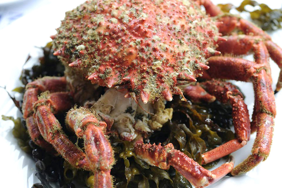 Mariscos y crustáceos , Centollo , Francia