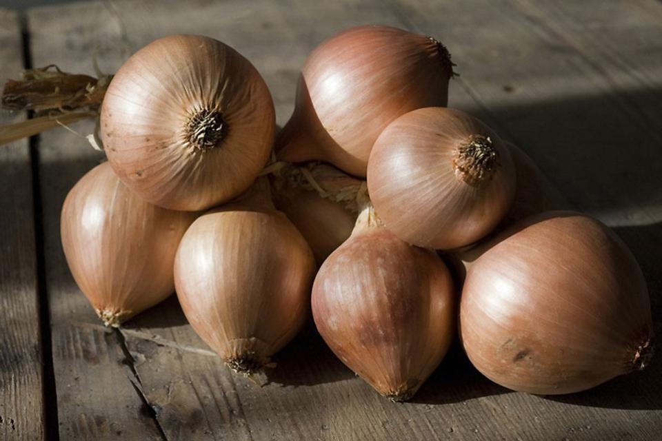 Las verduras , La cebolla , Francia