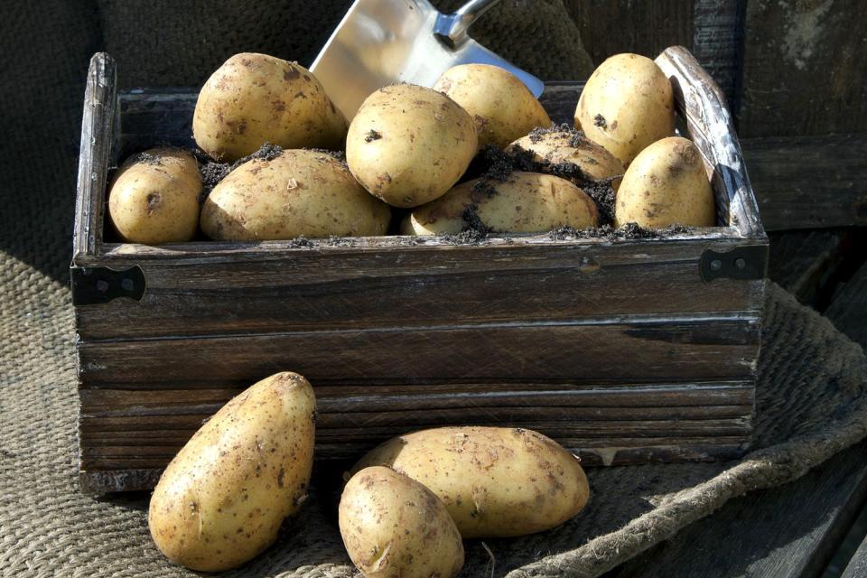 Las verduras , La patata , Francia