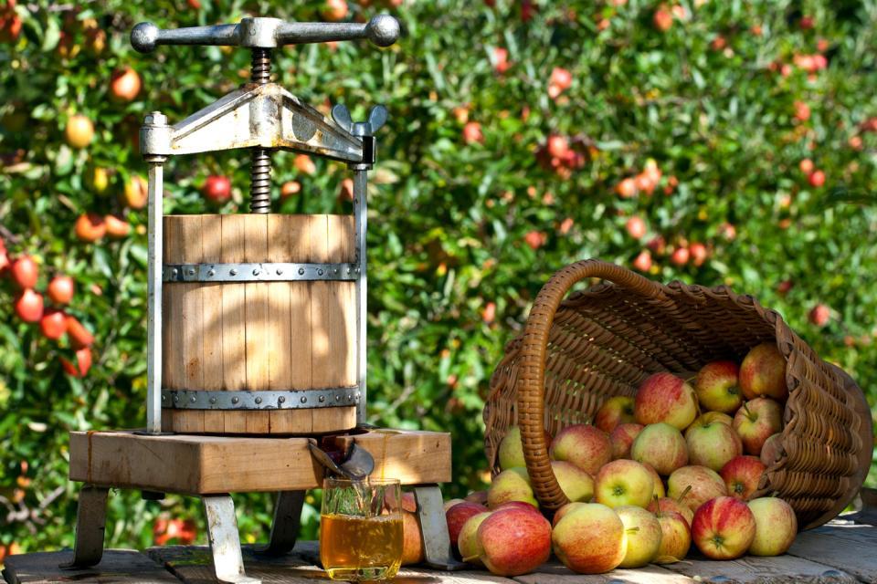 Cerveza, sidra y chouchen , Primero manzanas, después sidra , Francia