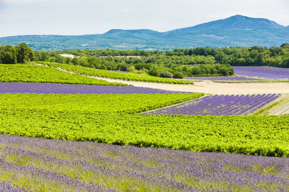 The vineyards of Provence, Oil, fish and wine, Enogastronomy, Provence-Alpes-Côte d'Azur