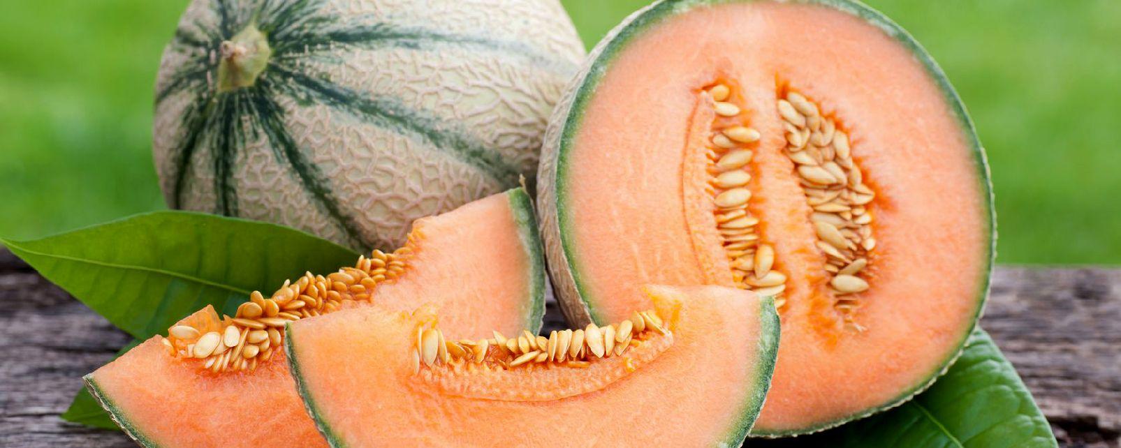 Cavaillon melon , The Cavaillon melon , France