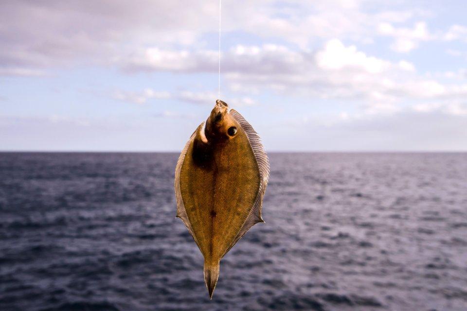 La gastronomie, alimentation, agriculture, pays de la loire, france, europe, loire-atlantique, sole, poisson, vend?e, cuisine, sables-d'olonne