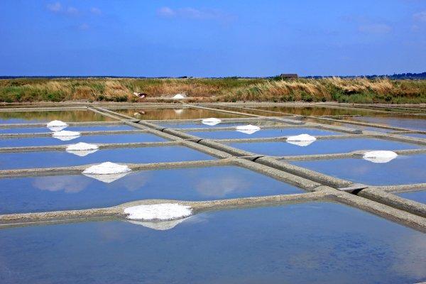 Pays de la Loire , The marshes , France