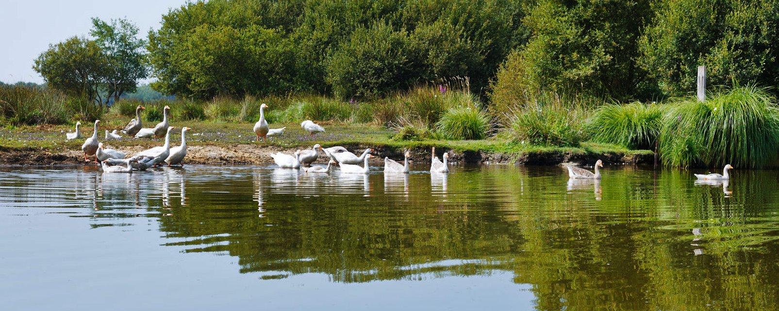 Loire-Atlantique , Les tourbières de la Loire-Atlantique , France