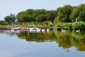 Loire-Atlantique , An ecosystem to be preserved , France